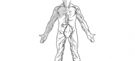 Secrets to Natural Healing: Lymphatics